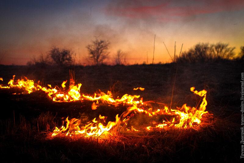 ассортимент горящее поле фото этом году забронировала