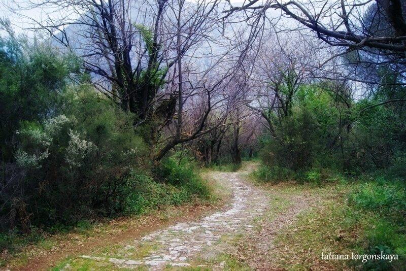 Каштановый лес в Столиве