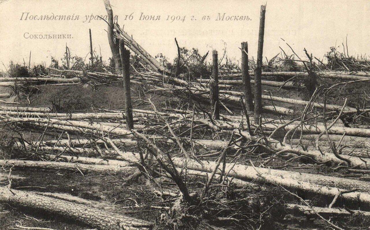 Последствия урагана 16 июня 1904 года под Москвой. Сокольники