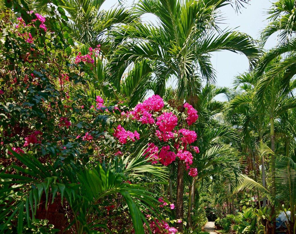 Самые популярные клубневые растения посадка и уход за ними