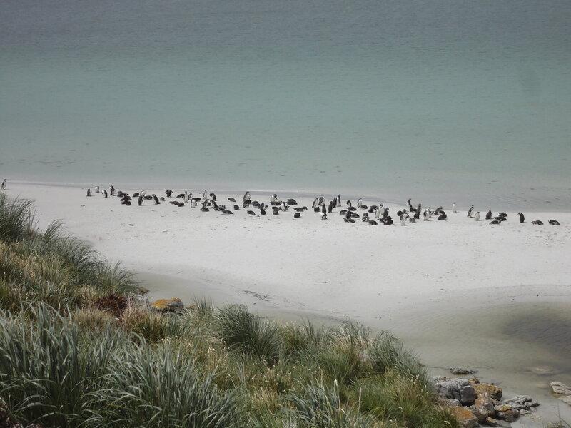 Фолкленды - пингвины и пиво