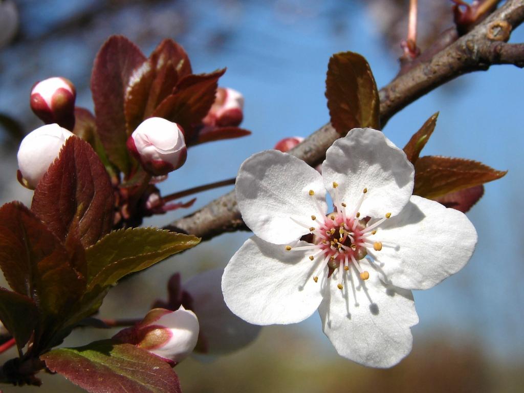 Spring/Весна
