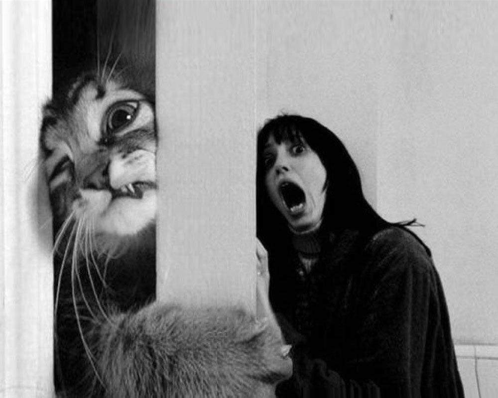 Кот, который хотел почитать Чужой Вклад