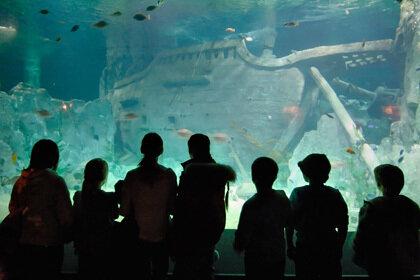 В Петербурге будет крупнейший в стране океанариум