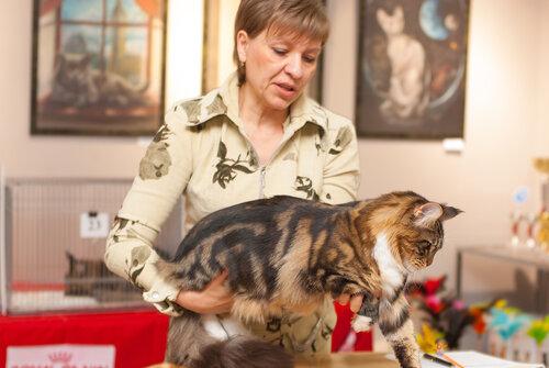 """Международная выставка кошек AFC """"Удивительные лесные кошки"""", 1 марта 2014 г. Сургут 0_b25e7_b9e20554_L"""