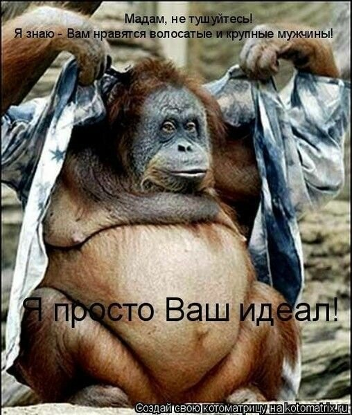 мужчина красивее обезьяны