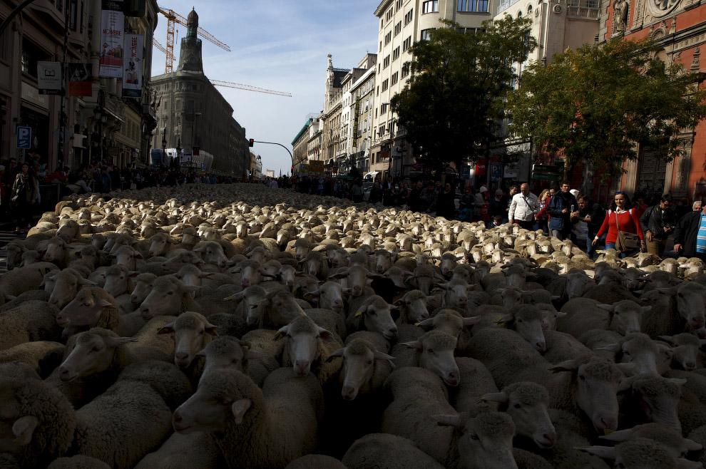 11. (Фото Sergio Perez | Reuters):