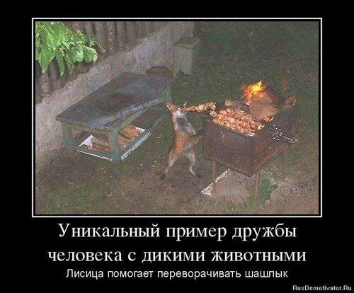 Уникальный пример дружбы человека с дикими животными