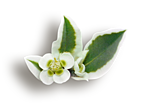http://img-fotki.yandex.ru/get/9932/97761520.cd/0_7fb95_a9c49264_orig.png