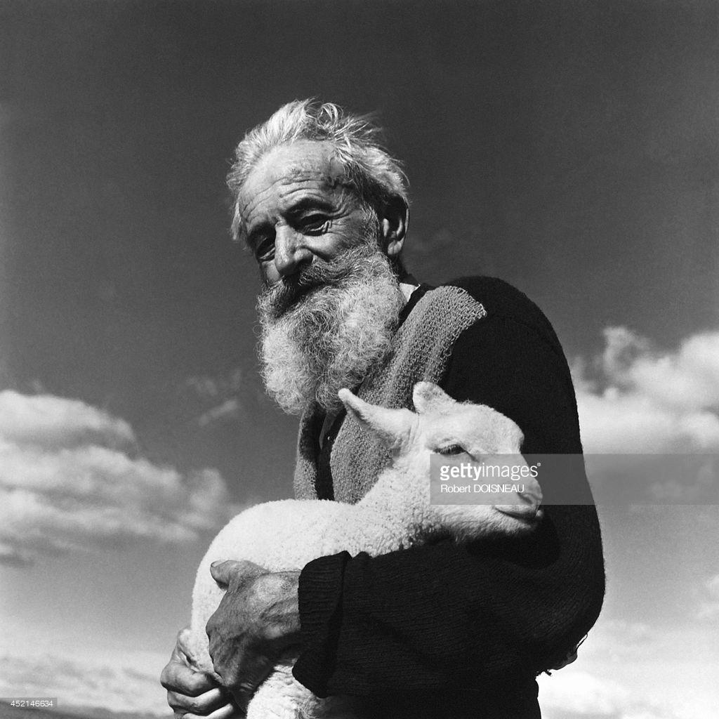 1958. Пастух, держащий овцу в руках во время перегона, Приморские Альпы