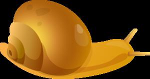улитки
