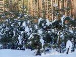 На полянке в зимнем лесу...