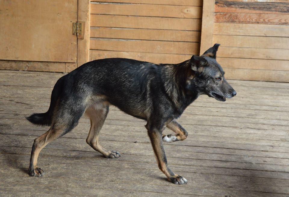 Гриня собака из приюта догпорт