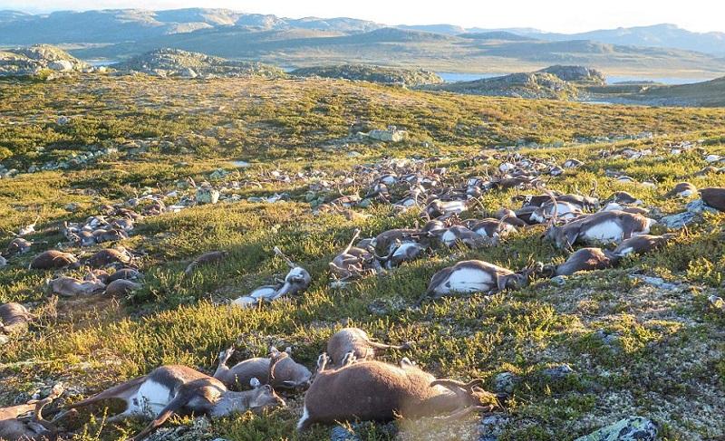 Специалисты отмечают, что это поистине уникальный случай: «Мы слышали о том, что животные погибают о