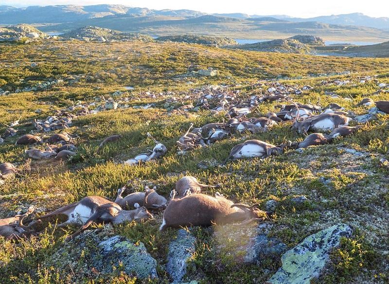 Точную причину смерти животных установят после того, что как их останки исследуют в ветеринарном инс