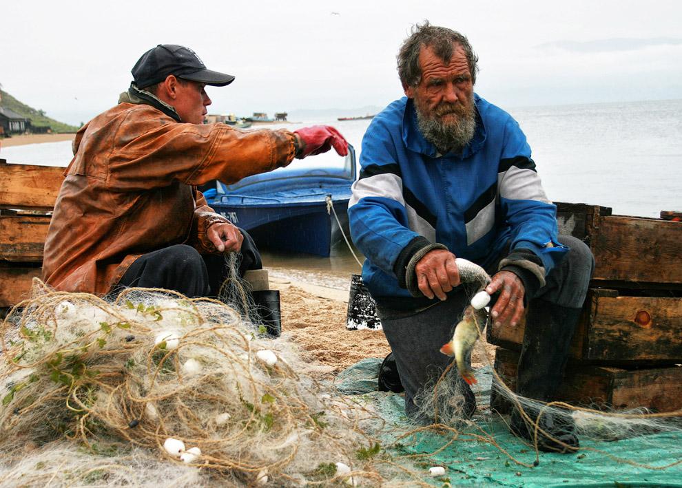 10. Знаменитая байкальская нерпа — один из трёх пресноводных видов тюленя в мире. Эндемик озера