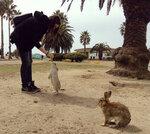 okunoshima-rabbit-island-japan-4.jpg