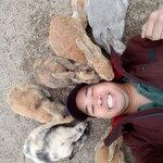 okunoshima-rabbit-island-japan-8.jpg