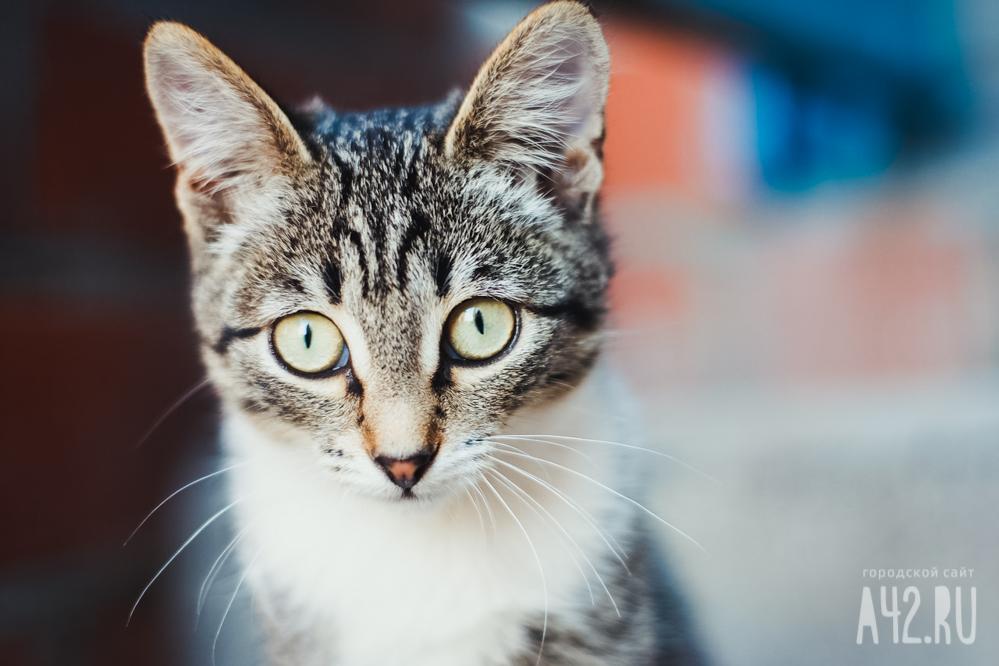 Кузбассовец залез вчужую квартиру, чтобы покормить кошку ипосмотреть телевизор