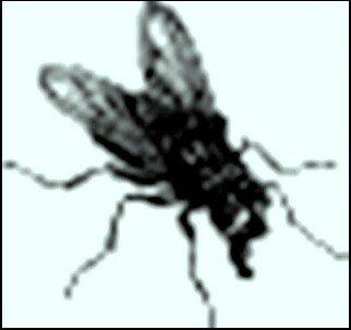 Иллюстрация В. Н. Горяева к пр-ю М.Твена Приключения Тома Сойера (12).jpg