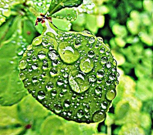 Лист в каплях дождя