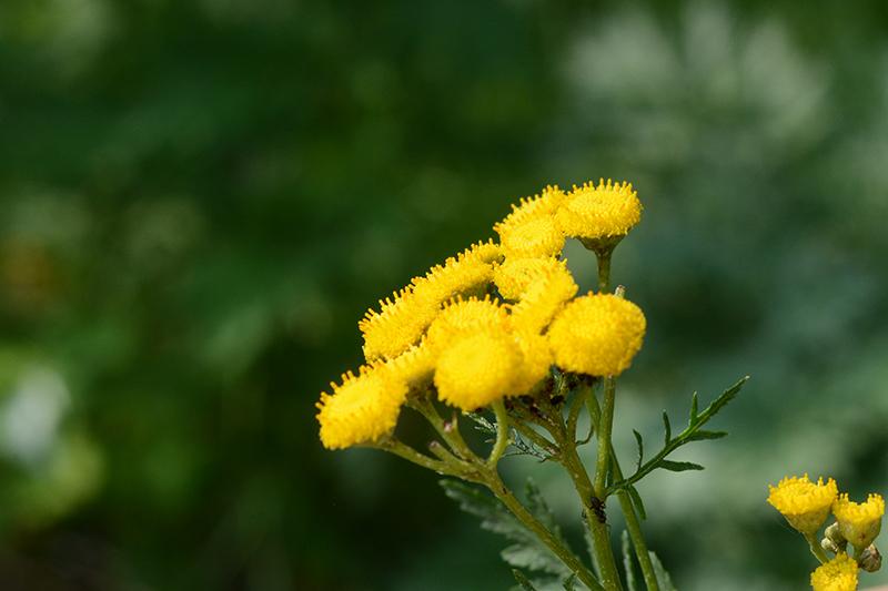 цветочное 26 16.jpg