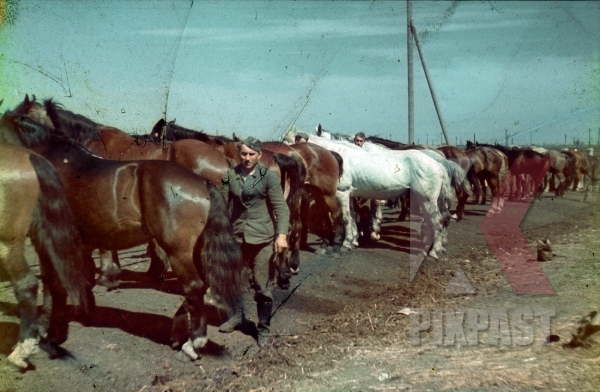 stock-photo-color-photo-of-a-german-infantry-soldier-careing-for-military-cavalry-horses-horse-ukraine-1942-7972.jpg
