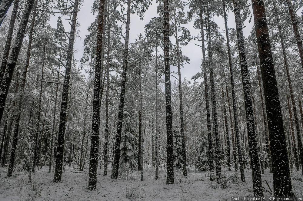 Агроусадьба Залесье