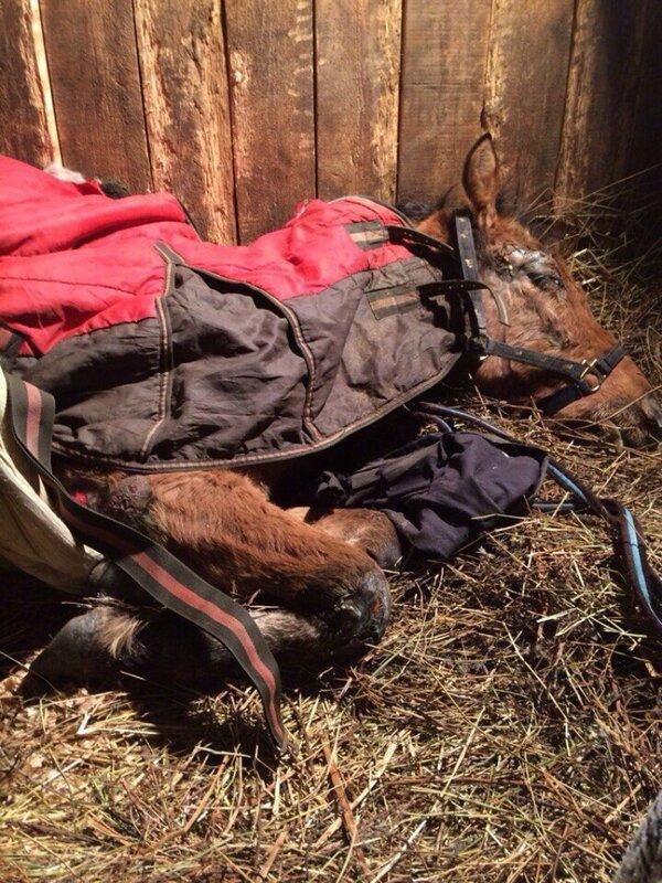 В Твери лошади, от которой отказалась хозяйка, требуется помощь