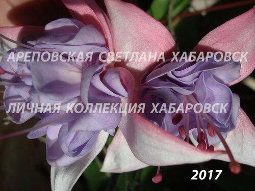 НОВИНКИ ФУКСИЙ. - Страница 5 0_19a023_c49de740_L