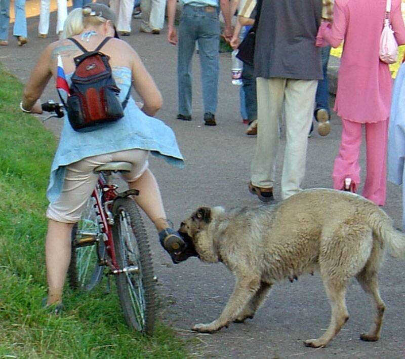 собака кусает.jpg