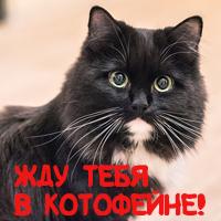 Banner_Kotofein.jpg