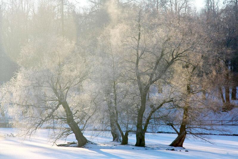деревья покрытые инеем