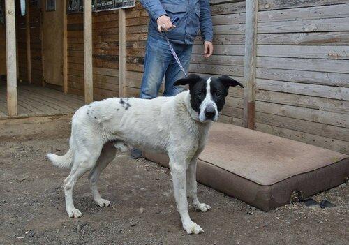 Ричард собака из приюта догпорта