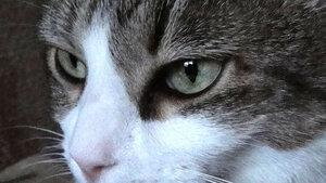 Лицо Кота