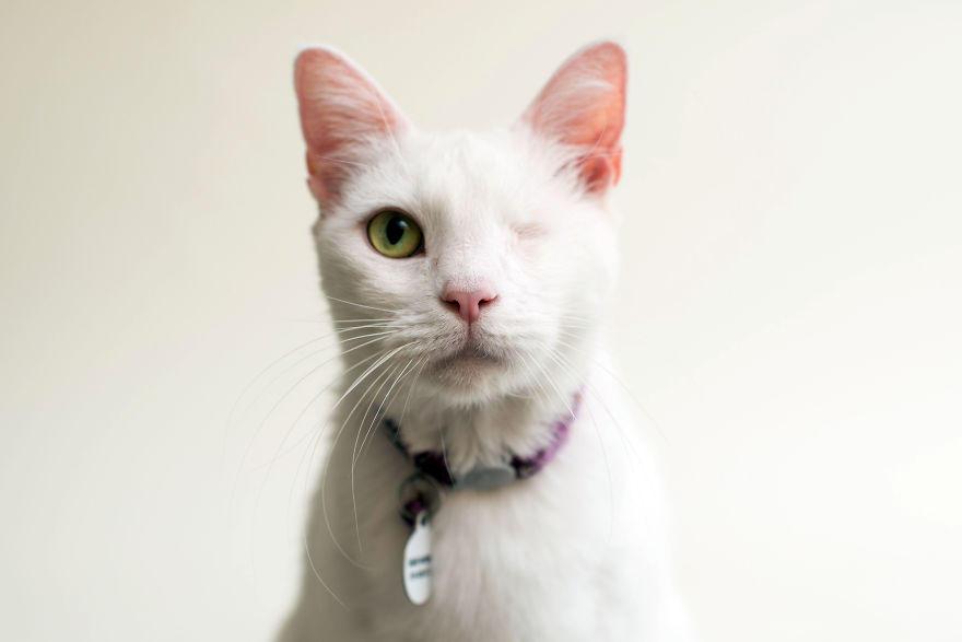 Фотограф снимает слепых котов, чтобы помочь им найти хозяев (11 фото)