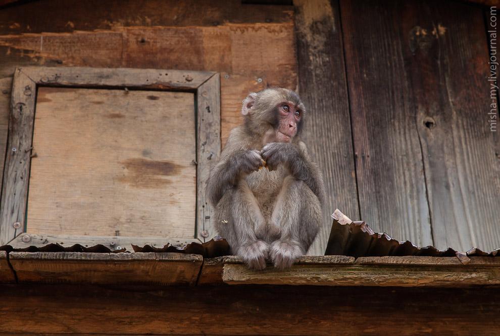 23. Вся тяжесть бытия — на лице этой обезьяны.