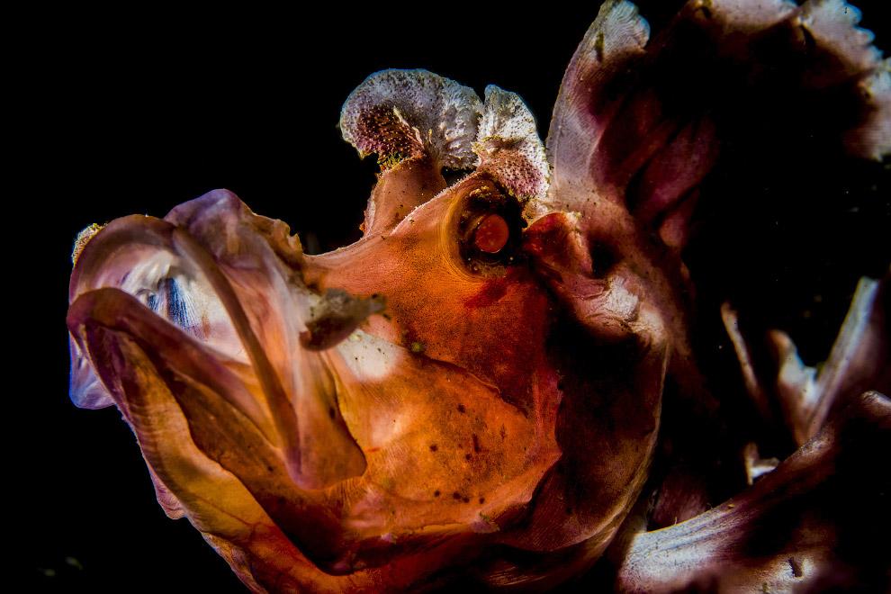 17. Групповое спаривание жаб. (Фото Luc Rooman | UPY 2017):
