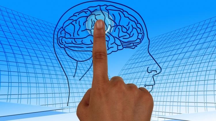 Ученые определили улучшающее память биологическое соединение