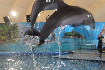 Ученые поведали, почему погибают дельфины