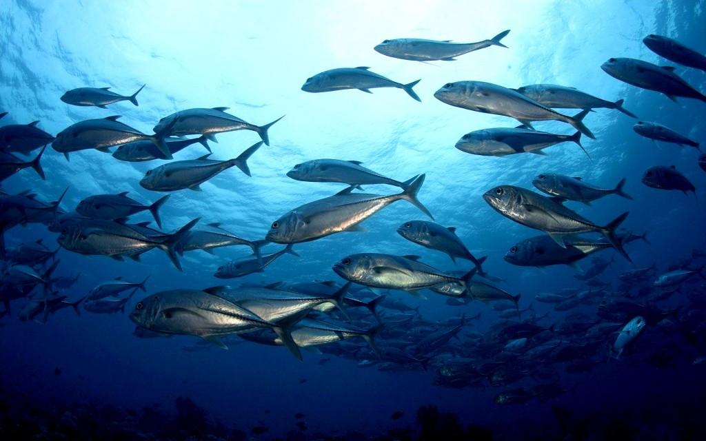 К 2048-ому вморях иокеанах может закончиться вся рыба