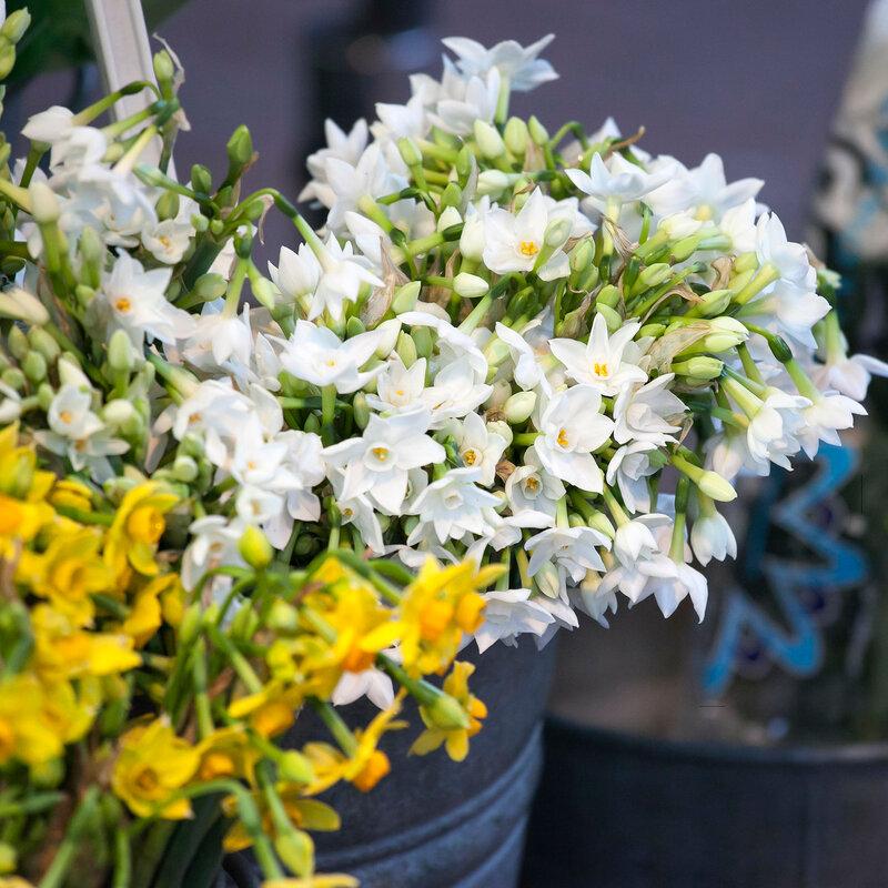 white flower narcissus in a garden