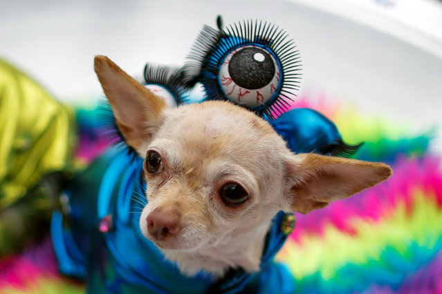 A dog dressed as an alien takes part in the annual halloween dog parade at Manhattan's Tompkins