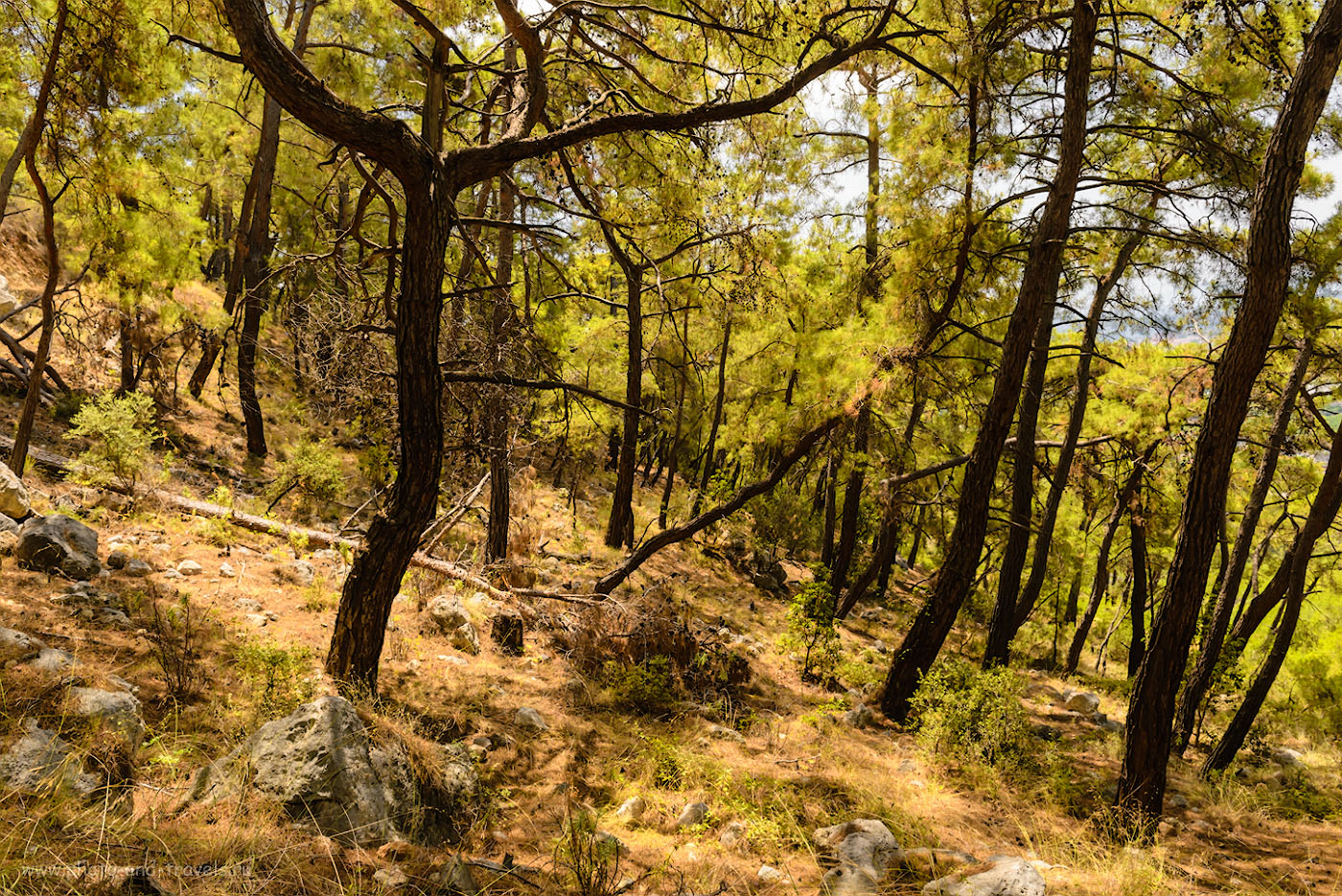 Фотография 4. Кедровый лес на склоне горы Чалыш в окрестностях Кемера. Приключения туристов в Турции.