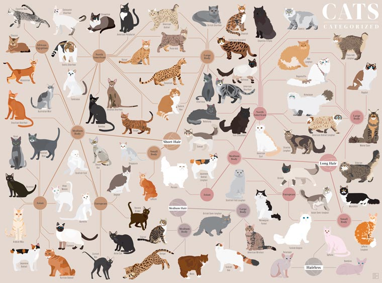 Cats Categorized - Classer les races de chats par types et origines