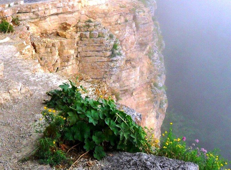 Цветочно-зелёная отрада глаз на скалах ... SAM_0689.JPG
