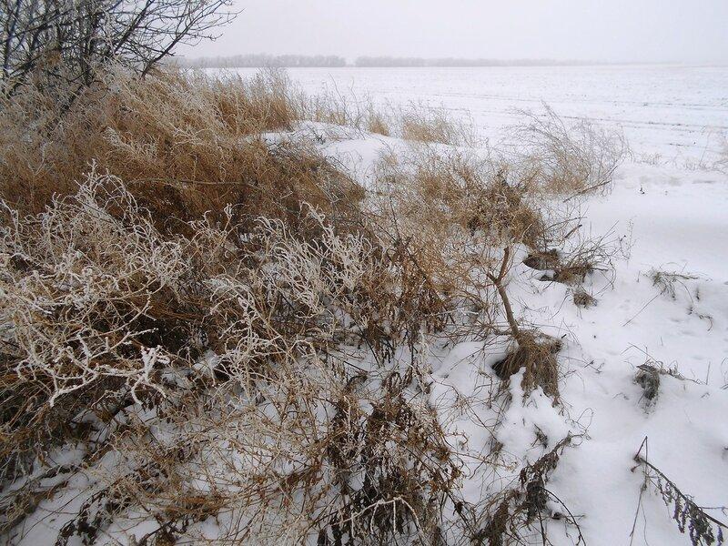 Зимний дизайн Природы ... В походе декабрьском, снежно-туманном,