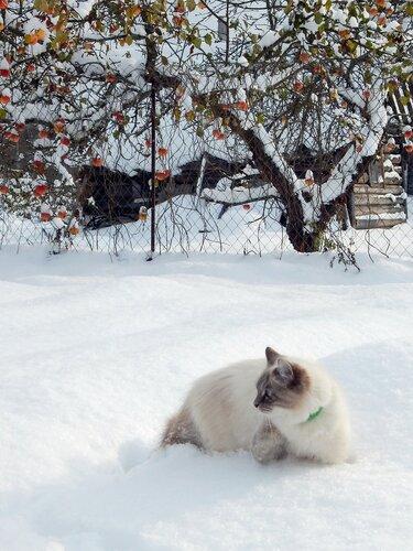 Купание в снегу