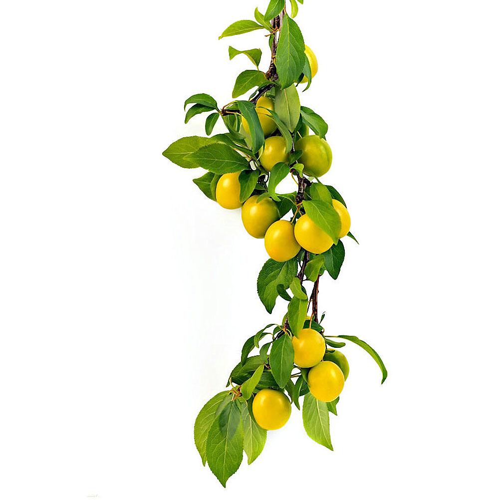 Натюрморт яблоко виноград груша 4