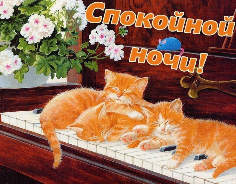 Большой, открытки со зверюшками и пожеланием хорошего вечера